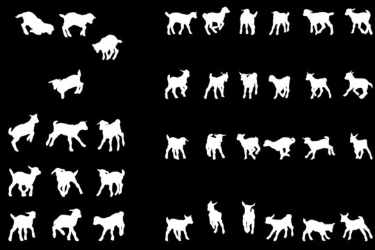 playful baby goat silhouettes collection