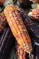 Indian corn on cob