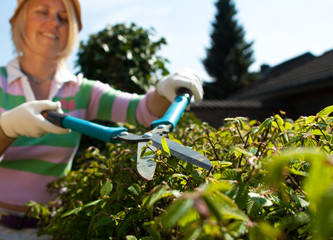 Working with a hedge trimmer