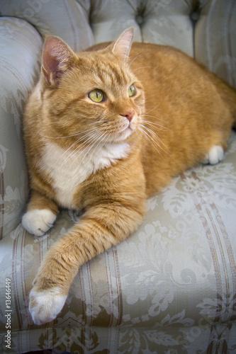 Orange and gray tabby cat