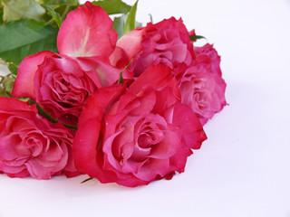 Muttertag,Rosen