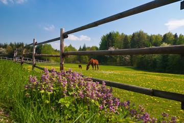 Pferde auf einer Koppel