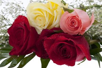 Bund Rosen