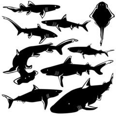 Dangerous sharks in vector silhouette