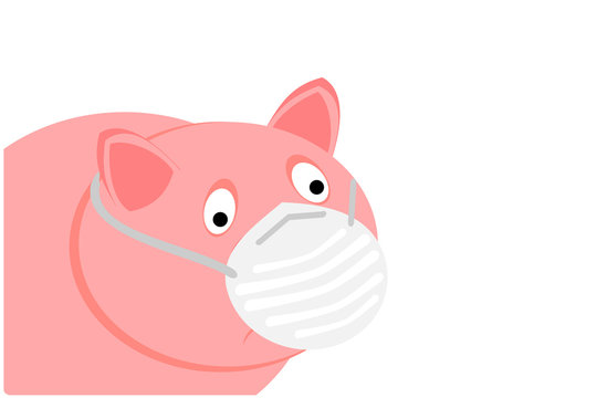 A pig with the swine flu