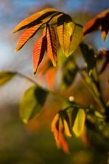 Blätter am Baum