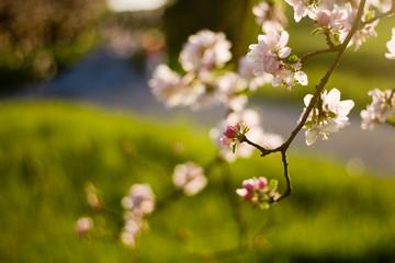 Blüten am Ast