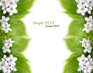 leaves border with cherry blossom on white background