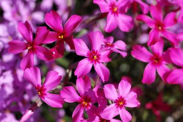 Spoed Fotobehang Macro garden composition