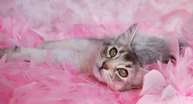 cat relaxing in pink feathers