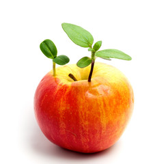 Plant in apple