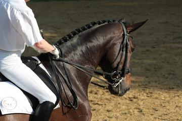 Pferdesport Dressur