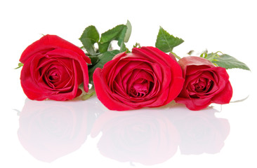 Three Red Roses With Reflection