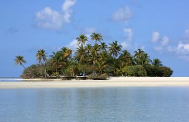 île déserte des maldives et cocotiers