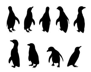 penguin silhouettes (Spheniscus humboldti)