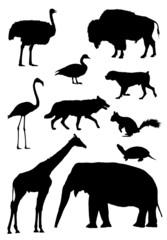 Ten animal silhouette