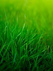 Grass background shallow DOF
