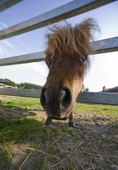 North Yorkshire, England; Horse looking through fence