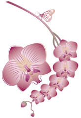 Orchid flowers with butterfly, vector