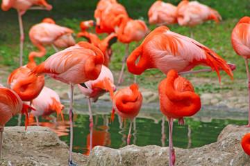 flamingos sleeping