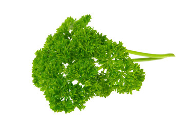 Petersilie - parsley 04