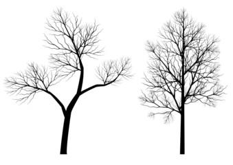 Silhouettes d'arbres (série 2)