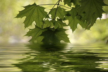 beautiful leaves water reflection