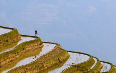 Poster de jardin Chine rice terraces of yuanyang, yunnan, china