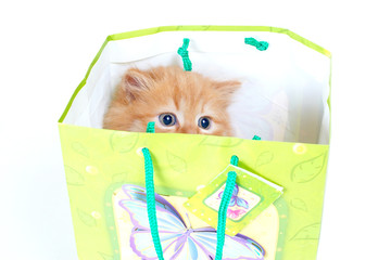 Red kitten with blue eyes in green gift bag