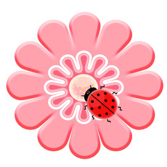 Spoed Fotobehang Lieveheersbeestjes Ladybug on the pink flower