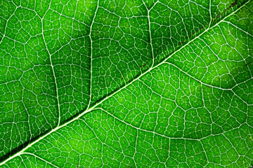 Close up of bright green leaf