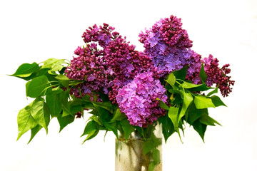 lilac bouquet over white