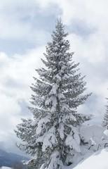 winterliche Tanne