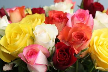 rosen in verschiedenen farben