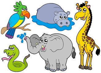 Poster de jardin Zoo Wildlife animals collection