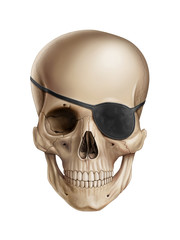 Pirate skull isolated on white background