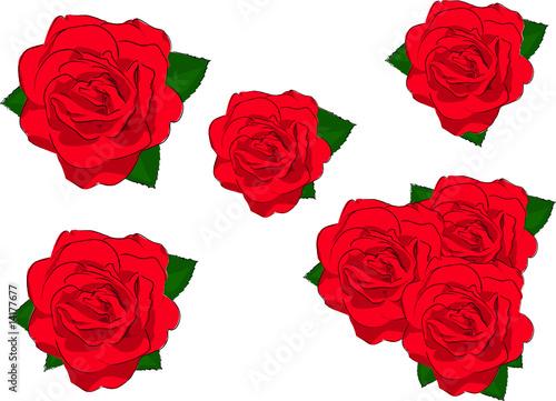 rote rosen stockfotos und lizenzfreie vektoren auf bild 14177677. Black Bedroom Furniture Sets. Home Design Ideas