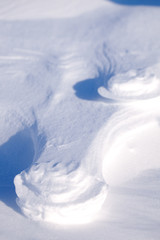 Polar Bear Track