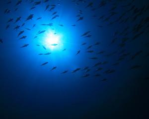 Tuna silhouettes against sun