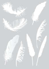 eight white feathers