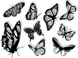 Farfalle in silhouette