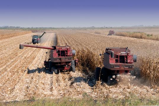 Combines Harvesting Corn