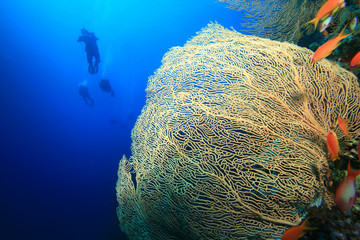 Fan Coral and silhouette of Scuba Divers