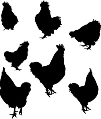 seven rooster silhouettes