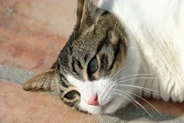 gros chat allongé sur la terrasse 2