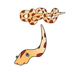 Boa Snake