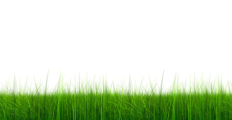 3d green grass rendered at maximum quality