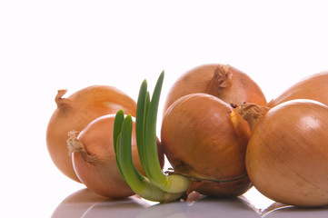 The sprouted onions