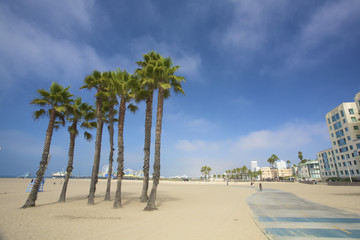Palms and the pier at Santa monica beach in Los Angeles