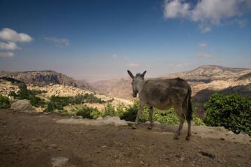 Wadi Dana mit Esel